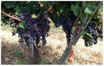 Wine guided tour